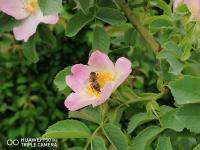 снимка 4 Капчици и пчели