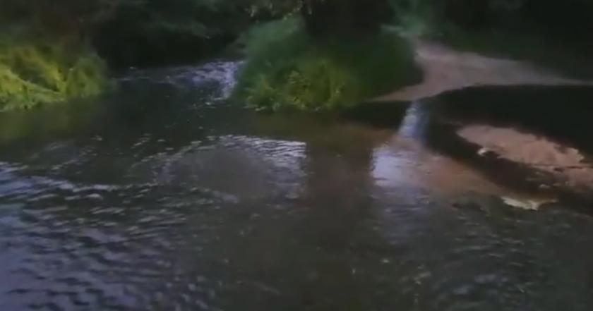 Две реки потекоха в черен цвят в района на Старосел. Рибата измря