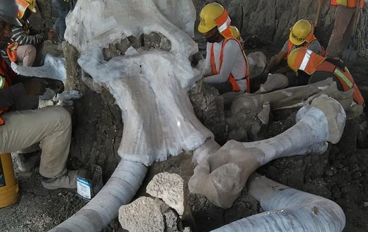 останките мамута открити строеж столицата мексико
