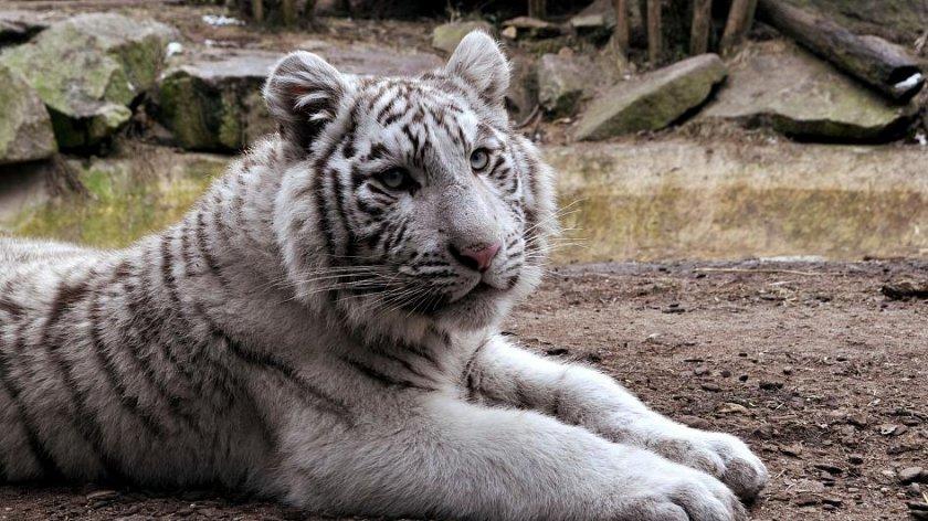 #60 секунди без COVID-19: Зоопаркът на София с вход свободен на 1 юни