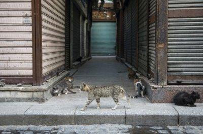 Забраняват яденето на кучета и котки в Шънджън