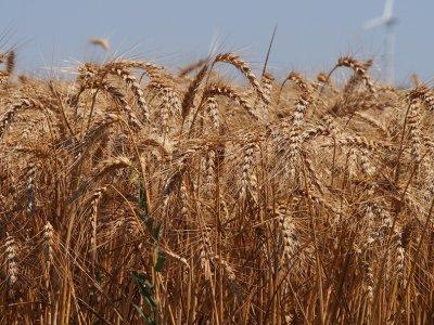 ЕК удължава срока за кандидатстване за директните плащания за фермерите