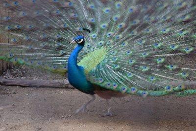 Зоопаркът във Варна ще излъчва в интернет