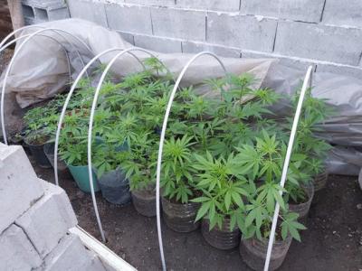 Разкриха добре оборудвана и прикрита наркооранжерия в Пазарджишко