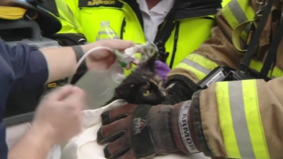 Спасиха котка при голям пожар в САЩ