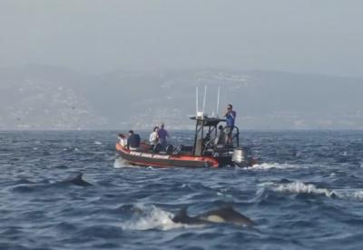 Стадо от 1000 делфини доближи калифорнийския бряг край Лагуна бийч