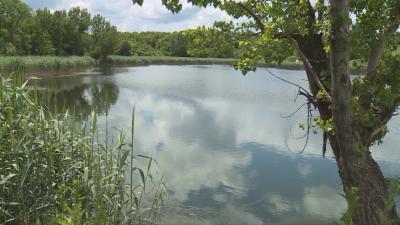 Мъртва ръба в езерото в русенското село Щръклево