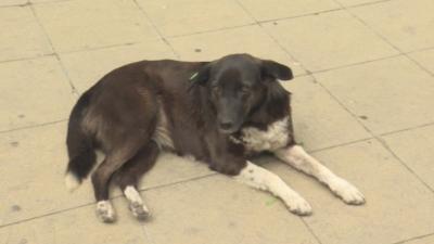 В Благоевград имат проект за нов приют за кучета, но няма пари
