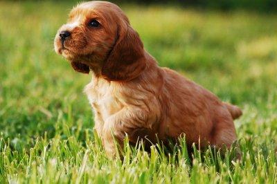 #60 секунди без COVID-19: Кои са породите кучета, подходящи за деца?