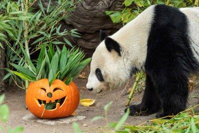 Хелоуин във Виенския зоопарк