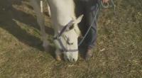 Във варненско село набират средства за закупуване на терапевтичен кон