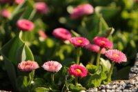 снимка 1 Настъпи астрономическата пролет (Снимки)