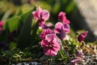 снимка 2 Настъпи астрономическата пролет (Снимки)