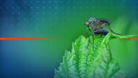 Русе е в готовност за борба с комарите