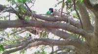 В Индия бездомни се самоизолират по дърветата