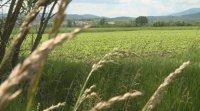 Земеделски производители дават шанс на безработни за препитание
