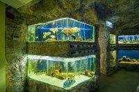 3D разходки из Природонаучния музей в Пловдив