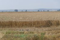Земеделски производители ще търсят повече сезонни работници заради кризата