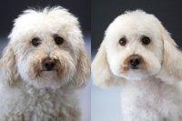 #60 секунди без COVID-19: Кучетата също влизат в пубертет