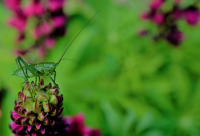 Отбелязваме Международния ден на биоразнообразието