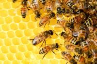 #60 секунди без COVID-19: Отбелязваме Международния ден на пчелата