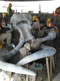 снимка 5 Останките на 60 мамута открити при строеж в столицата на Мексико