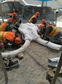 снимка 2 Останките на 60 мамута открити при строеж в столицата на Мексико