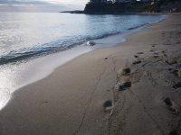 Проверка след сигнал за открити мъртви делфини