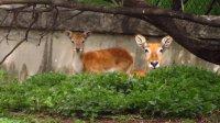 Вижте бебета, които се родиха през 2020 г. в столичния зоопарк и още за дивите обитатели там